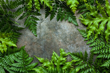 Wall Mural - Creative nature layout made of tropical leaves. Summer concept. Fern Palm leaf on wall. Nature beach background layout with free text space.