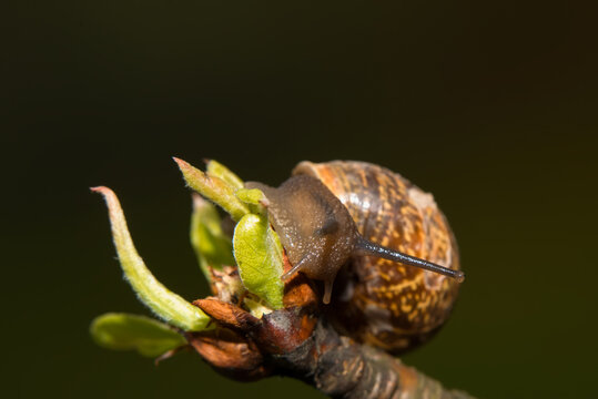 A snail moves on a yellow flower on a spring afternoon