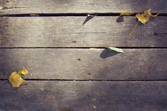 Old wooden boards with fallen leaves in sunspots. Background for design. View from above. Place for text