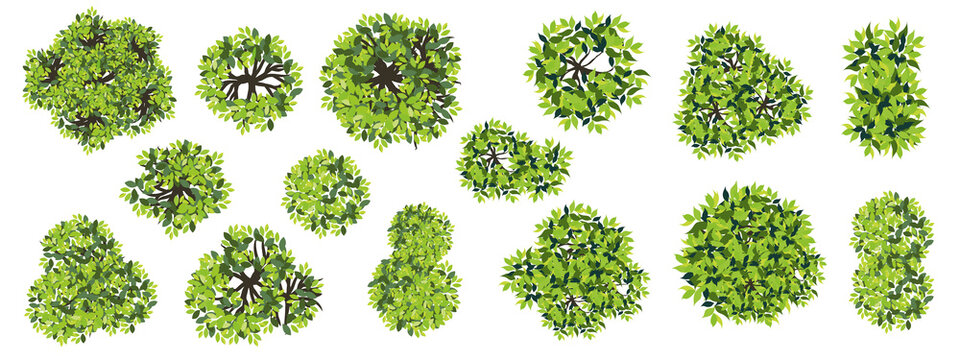 Collection of abstract vector green tree top view isolated on white background  for landscape plan and architecture layout drawing, elements for environment and garden, green grass vector