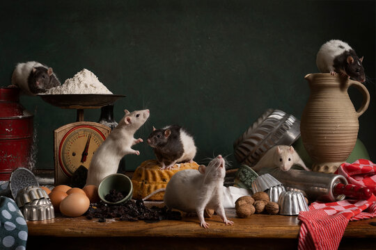 Six cute white and brown rats sitting in a stil life scene themed baking cake green background