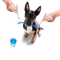 dog  at the dentist