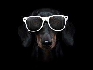 dog isolated on black dramtic dark background