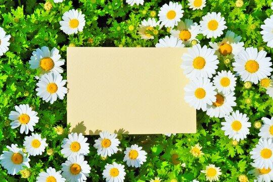 大量のノースポールの白い花と黄色の空白の長方形のフレームのモックアップ