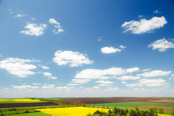Wall Mural - Vivid green grass on the spring field and fluffy white clouds on a sunny day.