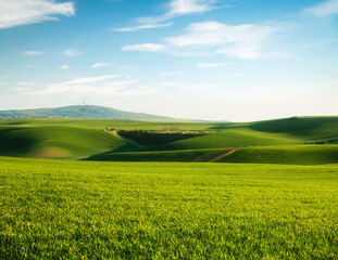 Wall Mural - Tranquil rural landscape in sunny day. Beautiful sunlight on the wavy fields.