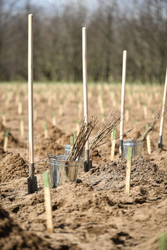 Planting trees on arid soil to fight against desertification