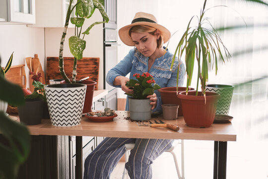 young woman in a straw hat are engaged in the cultivation and planting of home flowers