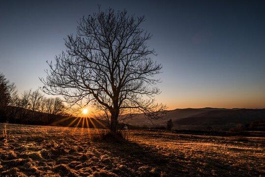 Landschaft und Sonnenuntergang hinter einem Baum ohne Blätter im Frühling mit Wiese Feld Acker und Berge im Hintergrund im Bayerischer Wald Deutschland