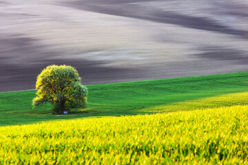 Rural landscape with field and tree