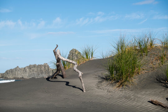 Coastal sand dune with drift wood and shadows - focus on foreground