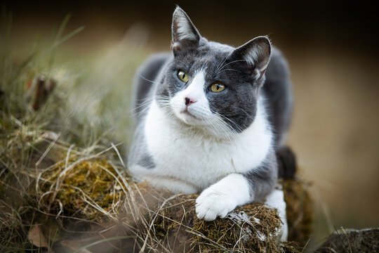 Domestic cat in nature background