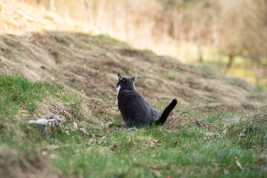Domestic cat sitting in the meadow and peeing