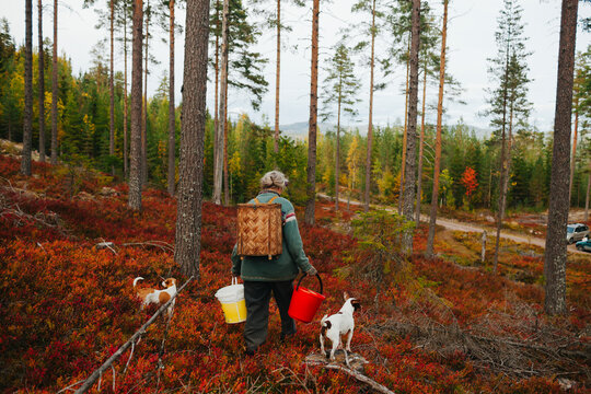 Rear view of woman with dogs walking through forest
