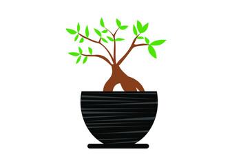 Obraz kwiat, drzewko, dom, ogród, sztuka, poezja, doniczka, balkon, liście, opieka, kobieta, prezent - fototapety do salonu
