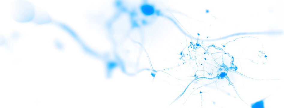 Neurons and nervous system. Nerve cells background with copy space (3d microbiology render banner)