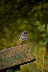 Fototapeta barwny ptak na ławce