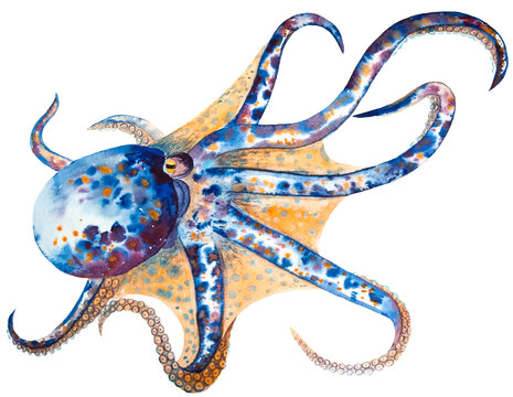 watercolor drawing of octopus