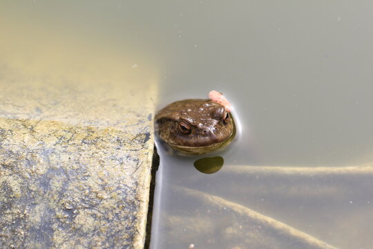 The toad came to the spawning pond