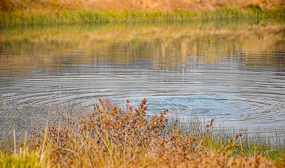 Ripples of the water of pond with landscape picture of wetland ground and water with grass and plants in the Indian subcontinent , Asia. December 2020.