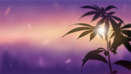 Blurred panorama of landscape at sunset with Marijuana on foreground. Silhouette of Cannabis against sunset.