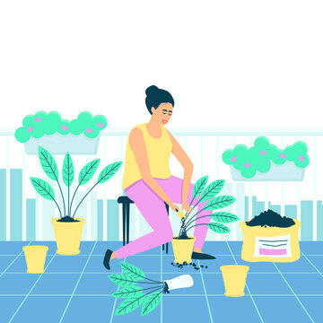 A woman transplants Spathiphyllum flowers on her balcony. Hobby for women of all ages. Plants on the balcony. Flat vector illustration.