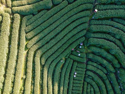 Aerial photography of Hangzhou West Lake Longjing Tea Mountain