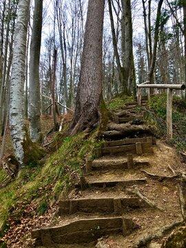 Treppe / Aufstieg im Wald