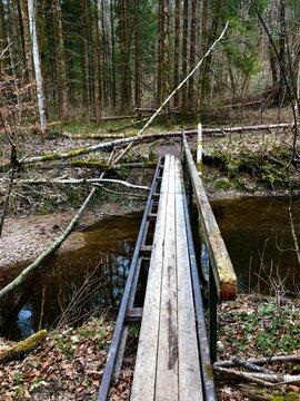 Steg / Brücke im Wald