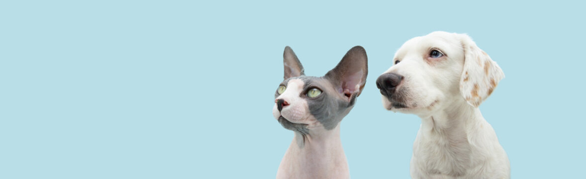 Banner cute pets, dog and cat looking away with serious and attentive expression. Isolated on blue pastel background