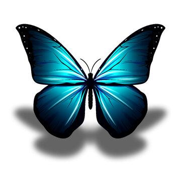 Mariposa de color hermosa de  primavera
