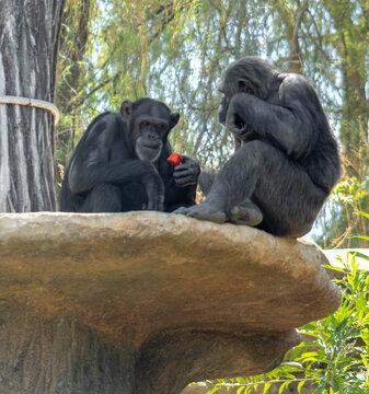 Pareja de monos
