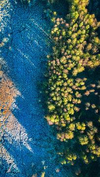 Frozen swamps in autumn, Poland. Wildlife in Poland.