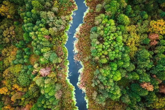 Swamp and algae in autumn. Aerial view of wildlife, Poland.