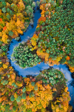 Autumn forest and blue river. Aerial view of wildlife, Poland