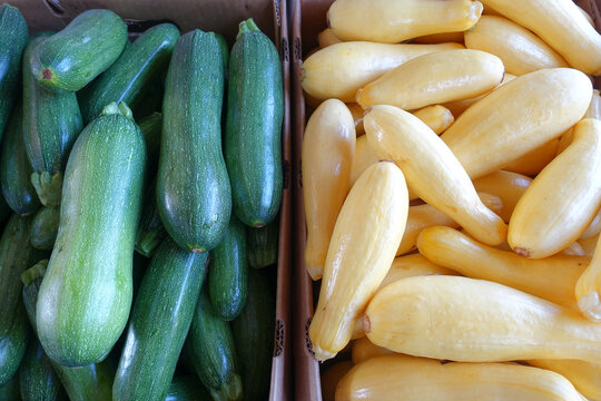 Cardboard Boxes Filled with Zucchini and Yellow Squash at a Farmers Market