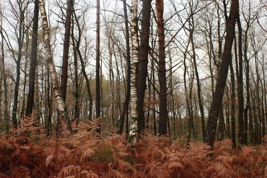 Forêt de feuillus dans la Sarthe