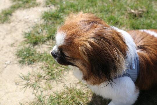 Kleiner Hund von oben - Close up, Nahaufnahme, Porträt, Kopf, Fellpflege