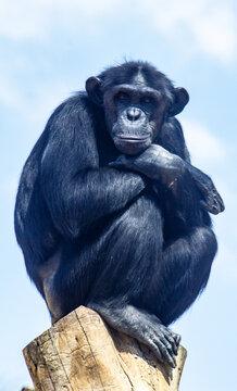 Smart monkey sits on a tree
