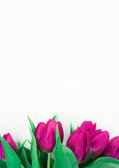 Tło tulipany