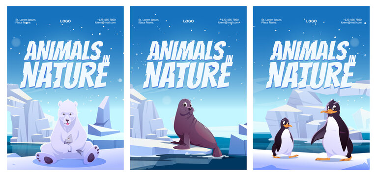 Animals in nature posters with penguin, polar bear and seal on floe. Vector flyers of zoo or natural park with cartoon illustration of wild animals of Antarctica, North pole and Alaska