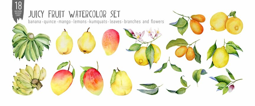 Tropical fruits, leaves and flovers hand drawn isolation on white watercolor set.