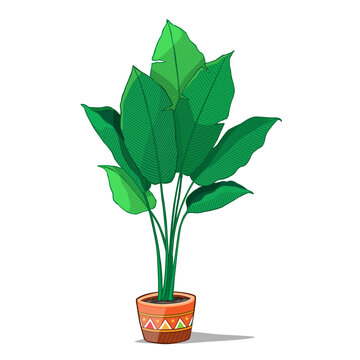Tropical plants in pot. Vector Illustration.