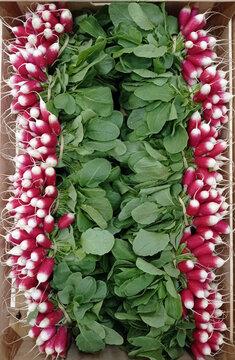légume / bottes de radis