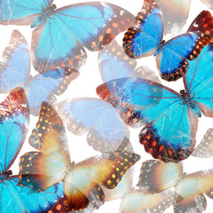 Abstract creative background with blue butterflies