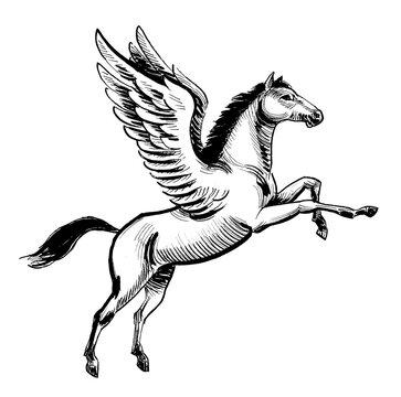 Flying mythological Pegasus. Ink black and white drawing