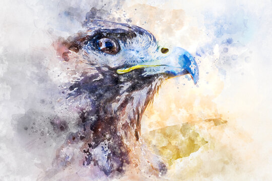 Watercolor, american eagle, diurnal bird of prey with beautiful plumage and yellow beak