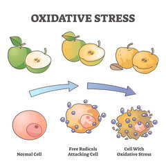 Oxidative stress aging as free radical cell attacking process outline diagram