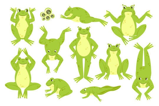 Frog cute vector illustration set. Cartoon funny happy green frog characters croak jump hop leap sleep, froglet toad froggy in different amphibian water animal poses collection isolated on white