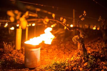Fototapeta Lutte contre le gel de printemps dans les vignes de Chablis en Bourgogne - Technique des bougies ou chaufferettes (2016)